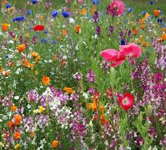 Small Picture 188 best Wildflowers Natures Beauty images on Pinterest