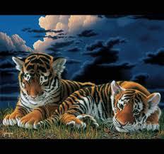 """Résultat de recherche d'images pour """"gifs animaux sauvages"""""""