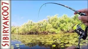 Рыбалка на щуку. Ловля в траве. АЗАРТНЫЕ поклёвки! Природа ...