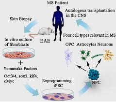 induced pluripotent stem cells essay  induced pluripotent stem cells essay