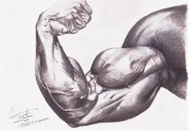 """Résultat de recherche d'images pour """"muscle"""""""