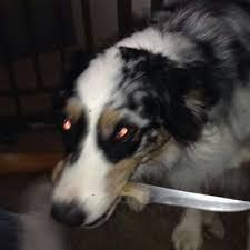 sad doggo ile ilgili görsel sonucu
