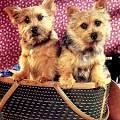 Гороскоп для девы собаки