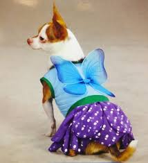 <b>Casual</b> Canine Woodland <b>Fairy</b> Dress Wings Dog Costume Outfit ...