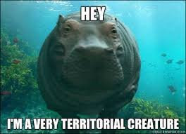 Hey I'm a very territorial creature - Random Hippo Facts - quickmeme via Relatably.com