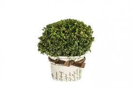 Купить декоративные <b>вазы</b> и цветы, цена <b>ваз</b> и цветов для ...