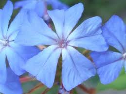 Resultado de imagen para libros de flores de bach