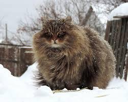 Image result for коты