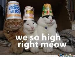 High Right Meow by TheCrimsonShadow - Meme Center via Relatably.com