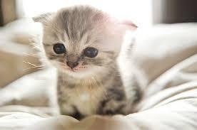 """Résultat de recherche d'images pour """"chat mignon"""""""