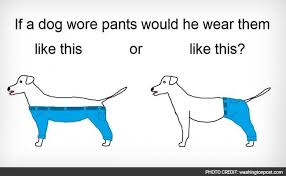 dog-wearing-pants-wp_650x400_61451447657.jpg via Relatably.com
