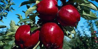 """Результат пошуку зображень за запитом """"красивые картинки яблоки"""""""