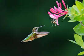 Top 10 <b>Colorful</b> Flowers Hummingbirds <b>Love</b> - Birds and Blooms
