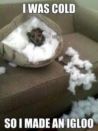 I was cold so i made an igloo funny memes dog cold meme funny ... via Relatably.com