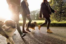 the best careers for dog lovers how your dog can become a canine good citizen