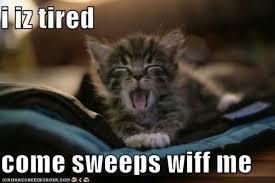 Sleepy kitty | Squee | Pinterest | Sleepy Kitty and Kitty via Relatably.com