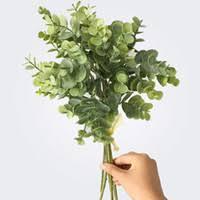 <b>Money</b> Plant Flower Canada