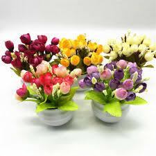 <b>Бонсай</b> комнатное растение цветочный декор - огромный выбор ...