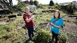 Annfield community garden gets a makeover
