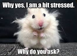Why yes, I am a bit stressed. Why do you ask? - mouse - quickmeme via Relatably.com