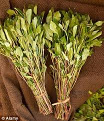 Image result for khat