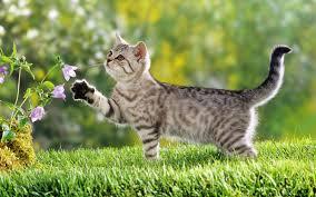 Resultado de imagem para gatos e plantas