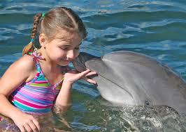 اروع الدلافين images?q=tbn:ANd9GcT