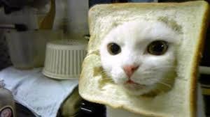 <b>Cat</b> Breading | Know Your Meme