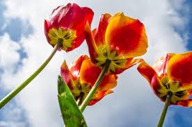 spring season urdu essay mausam bahar ka my favourite season in  beautiful free hd spring season wallpapers and spring images