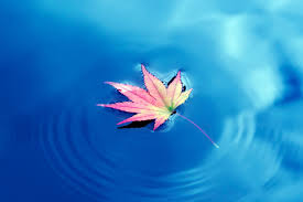 Image result for leaves water