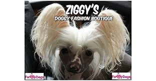 <b>For My Dogs</b> Sizing Page – Ziggy's Doggy Fashion Boutique