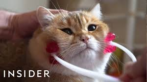 31 <b>Pets</b> Products For <b>Animal Lovers</b>   The Ultimate List - YouTube