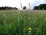 meadowy