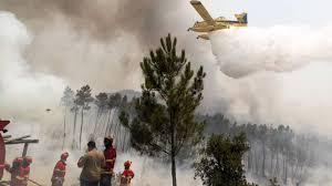 Fogo queimou entre 500 a 600 hectares nos concelhos de Alijó e Murça