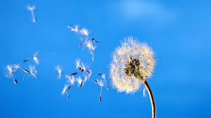 Αποτέλεσμα εικόνας για λουλούδια για ευχές