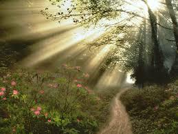 Imagem floresta