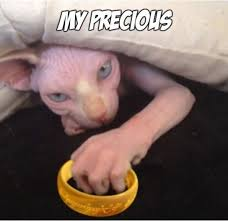 My precious - Cat - Memes Comix Funny Pix via Relatably.com