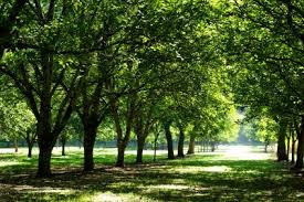 Image result for images of trees