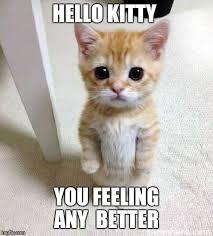 Cute Cat Meme - Imgflip via Relatably.com