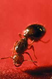 black ants kitchen images tiny