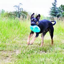 <b>KONG Jumbler игрушка</b> для собак Регби - купить в интернет ...