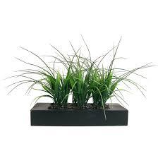 indoor plants wayfair grass in rectangular planter i office lobby design designing a home amazing office plants