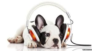 Classical <b>music</b> 'helps <b>dogs</b> relax' - BBC News