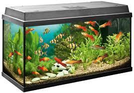 Znalezione obrazy dla zapytania akwarium rybki
