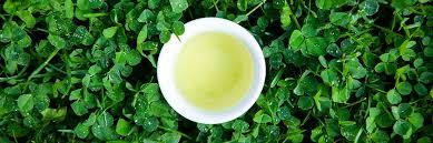 <b>Loose Leaf Green</b> Tea