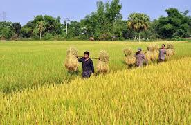 không - Việt Nam: Khi người cày không còn ruộng (RFI) Images?q=tbn:ANd9GcTOkBJDkAzZhlXcOlP_vjwrdwCxtDf_JJ54KuTYBKrygWq7K18lwQ