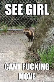 Paralyzed tanuki memes | quickmeme via Relatably.com