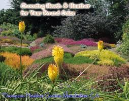 Growing <b>Heath and Heather</b> for Year Round Color | Singing Tree ...