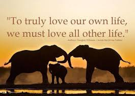 Image result for elephant quotes about love