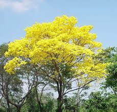 Resultado de imagen para flora de venezuela